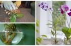 Orchidee in acqua? Prova a coltivarle così con queste indicazioni utili