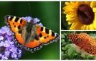 Invita le farfalle nel tuo giardino o sul balcone con queste piante bellissime