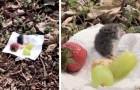 Vede un topolino affamato in casa e gli organizza un piccolo picnic all'aria aperta: un momento dolcissimo