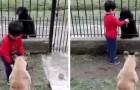 Un bimbo offre ad un cane randagio il cibo del proprio cane: