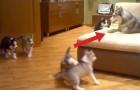 Regardez comment cette maman s'amuse avec ses chiots. Leur réaction? Irrésistible!