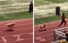 Un cagnolino sbuca all'improvviso dagli spalti e vince la gara di corsa: il pubblico è in delirio per lui