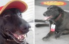 Perro abandonado es adoptado en una estación de servicio y