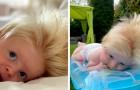 """Junge wurde mit einer dichten Mähne blonden Haars geboren: """"Mein Mann und ich sind brünett!"""""""