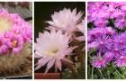 Decora la casa con queste piante grasse dai fiori bellissimi e profumati