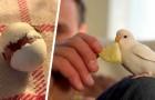 Er findet ein zurückgelassenes Wellensittich-Ei und lässt es bei sich zu Hause schlüpfen: Jetzt sind sie unzertrennlich geworden
