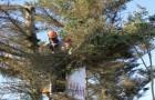 Il coupe en deux l'arbre de son voisin parce qu'il envahit son espace : il était là depuis plus de 25 ans