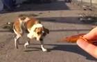 Depois de um acidente, este cachorro vivia no lixo. Veja como ele está agora.