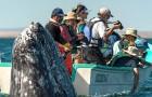 Un fotografo cattura l'esatto momento in cui una balena coglie di sorpresa una barca emergendo dall'acqua