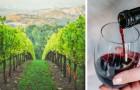 Een wijnmakerij zoekt mensen die wijn drinken: het salaris is $10.000 per maand