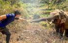 Veterinario encuentra el elefante que salvó 12 años antes: