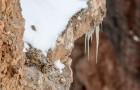 Hittar du snöleoparden på de här bilderna?