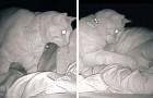 Ze wordt altijd moe wakker ondanks dat ze slaapt: ze installeert een camera en ontdekt dat het de schuld van haar kat is