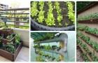Pneus, bouteilles, tubes en PVC : vous pouvez utiliser de tout pour cultiver un potager même si vous avez peu de place