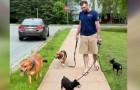 Hondenbezitter wordt na ongeluk opgenomen in het ziekenhuis maar zorgt een man voor de honden