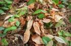 La tua pianta ha le foglie bruciate dal sole? Prova a recuperarla con qualche accortezza
