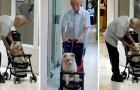 En äldre man tar med sig sin gamla hund till veterinären i en barnvagn