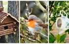 Vuoi accogliere i pettirossi in giardino? Scopri come renderlo più invitante per questi bellissimi uccellini