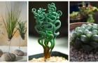 Arreda gli interni con queste piante dall'aspetto insolito e affascinante: sono facilissime da coltivare
