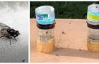 Una trappola efficace per mosche e moscerini: costruiscila con una semplice bottiglia di plastica