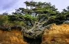 Deze fascinerende boom lijkt te zweven en blijft in evenwicht door zijn wortels