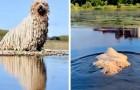 Questo cagnolone ha i peli che ricordano le setole di un mocio: un divertente video lo ha reso una celebrità