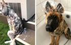 15 Hunde, für die sich die Badezeit in einen wahren Albtraum verwandelt