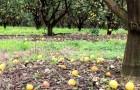 Un agriculteur ne trouve aucun travailleur prêt à récolter ses agrumes et perd une récolte de 50 millions de dollars