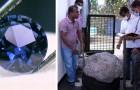 Des ouvriers creusent un puits dans le jardin d'un homme et découvrent des saphirs d'une valeur de 100 millions de dollars