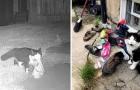 Gatto ama rubare le scarpe a tutti i suoi vicini: la padrona lo scopre e apre un gruppo Facebook per restituirle