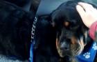 Een hond sterft 's nachts: de reactie van zijn broer laat je sprakeloos.