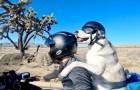 Este hombre ha emprendido un increíble viaje en moto junto a su husky: han recorrido 5000 kilómetros