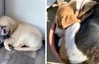 16 perros a los que no les importa nada el lugar y la posición en la que fueron atrapados durmiendo la siesta