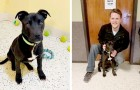 Op een hond wordt euthanasie gepleegd in een kennel, maar hij wordt na een paar minuten weer wakker: een familie adopteert hem