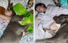This little dog and his little human are so close that they can no longer sleep apart