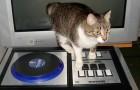 Gato que se queda solo en la casa enciende por error la música a todo volumen: denunciado por los vecinos
