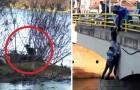 Ein Welpe ist am Flussufer gefangen. Was die Passanten tun, verdient einen Applaus