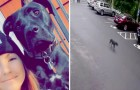 A little dog runs away from home to join her mistress at work: she thought she had been abandoned