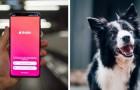 Un canile carica su Tinder le foto degli animali abbandonati con la speranza che trovino l'anima gemella