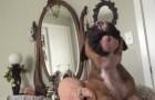 Ella busca enseñarle a urlar: la respuesta del cachorro es estupenda!