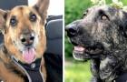 Ze doen de DNA-test van de hond en ontdekken dat ze de nicht is van hun vorige huisdier