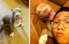 Joven encuentra a su perro secuestrado recorriendo más de 1000 kilómetros para ir a salvarlo