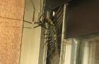 Entra nel suo appartamento in Giappone e trova un gigantesco centopiedi