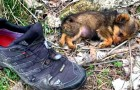 An abandoned puppy takes shelter behind an old shoe: a man saves him and gives him a second chance