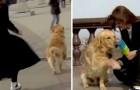 Un cane ruba il microfono di una giornalista in diretta televisiva: la scena è esilarante