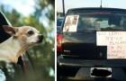 Han tappar bort sitt husdjur och skriver en skylt på bilen: