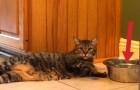 Diese Katze ist durstig und faul. So löst sie BEIDE Probleme auf einmal...