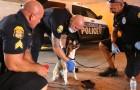 Vidéos sur la Police