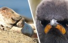 Il lato più esilarante della natura? Ce lo mostrano queste 15 foto finaliste del Comedy Wildlife Awards