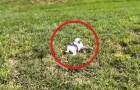 Un cucciolo si trova sul ciglio di una vallata: ciò che fa è esilarante!